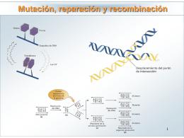 Tema 14: DNA: Mutación, reparación y recombinación
