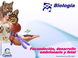 Clase 16 Fecundacion desarrollo embrionario y fetal