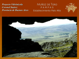 Proyecto Vitivinícola Muñoz de Toro Pampas SRL Coronel Suárez