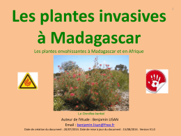 plantes-invasives-de-Madagascar