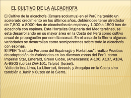 02 ALCACHOFA - Retroalimentacion