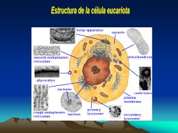 clasificacion - Facultad de Ciencias Veterinarias