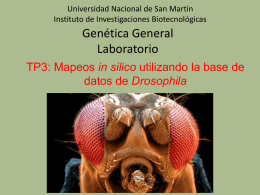 P + + + - genoma . unsam . edu . ar