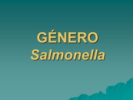 salmonella06