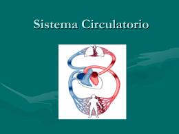 Sistema Circulatorio - Colegio Miguel de Cervantes, Punta Arenas.