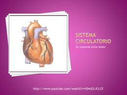 Sistema circulatorio - DrLeoCarlosAnatomia