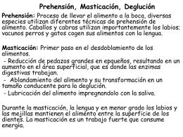 Prehensión, masticación y deglución