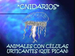STINGING CELL ANIMALS (CNIDARIANS)