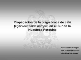 Propagación de la plaga broca de café (Hypothenemus hampei)