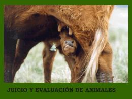 Juicio y evaluación de animales. Dr. Marcos Berruti