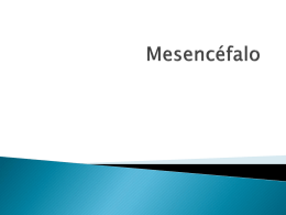 20 Mesencefalo, Proencefalo, Diencefalo