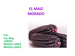 03.- MAIZ MORADO