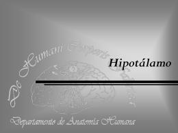 Hipotálamo - eTableros