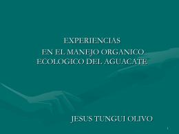 7.- Experiencia en Aguacate Orgánico