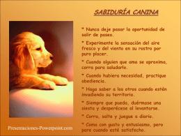 SABIDURÍA CANINA - Presentaciones Power Point
