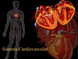 6_Sistema_Cardiovascular_1.
