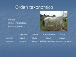 Orden taxonómico - anatomiayplastinacion