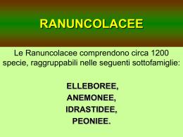 RANUNCOLACEE - Dott. Stefano Ciappi
