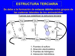 Estructura Primaria del Colágeno