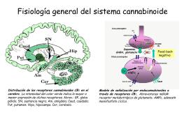 Fisiología general del sistema cannabinoide