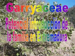Familia garryaceae: geobotanica