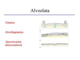 0828_Apicomplexa
