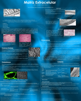 Matriz extracelular - Medicina