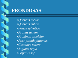 Frondosas - wikiforestales