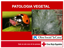 Extracto de algas (diatomeas)