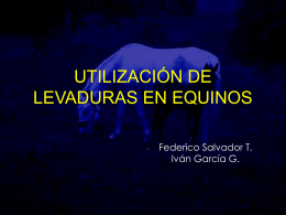 levaduras en alimentación de equinos