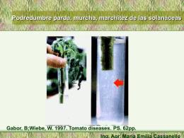 PS. 62pp. Síntomas Ing. Agr. María Emilia Cassanello Foto tomada