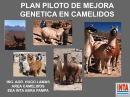 Lamas - Sociedad Argentina de Genética