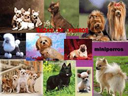 razas de perros - ESPAÑOL OFICIAL MS. MAGALI A. WILMAN