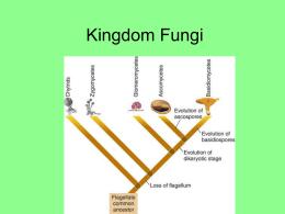 Kingdom Fungi - dewhozitz.net