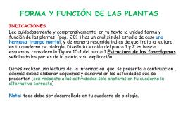 forma y función de las plantas indicaciones