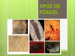 TIPOS DE FÓSILES (2960896