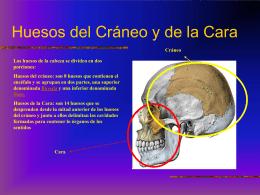 huesosdelcraneoycaraanatomia-121010204028