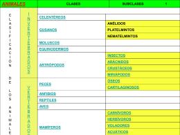 Animales- Clasificación