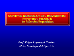 Control Muscular del Movimiento Humano