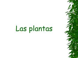 plantas - servidor ceip juan de vallejo