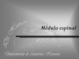 Módulo IX Médula espinal