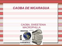 caoba de nicaragua