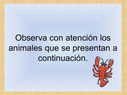 Observa con atención los animales que se presentan