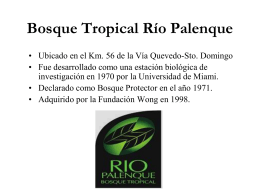 Bosque Tropical Río Palenque