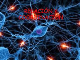 Relación y Coordinación (presentación)