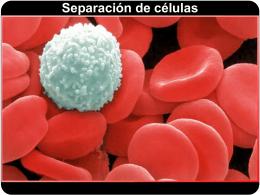 Separación de células Separación de células Separación de