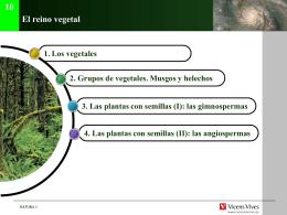 3.R. Vegetal