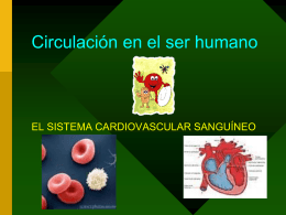 Circulacion en el ser humano