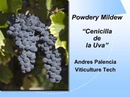 Cenicilla de la Uva
