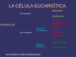 estructura - La Web de la Biología Fácil